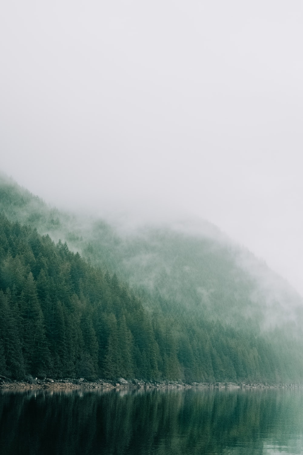 green trees covered by fog