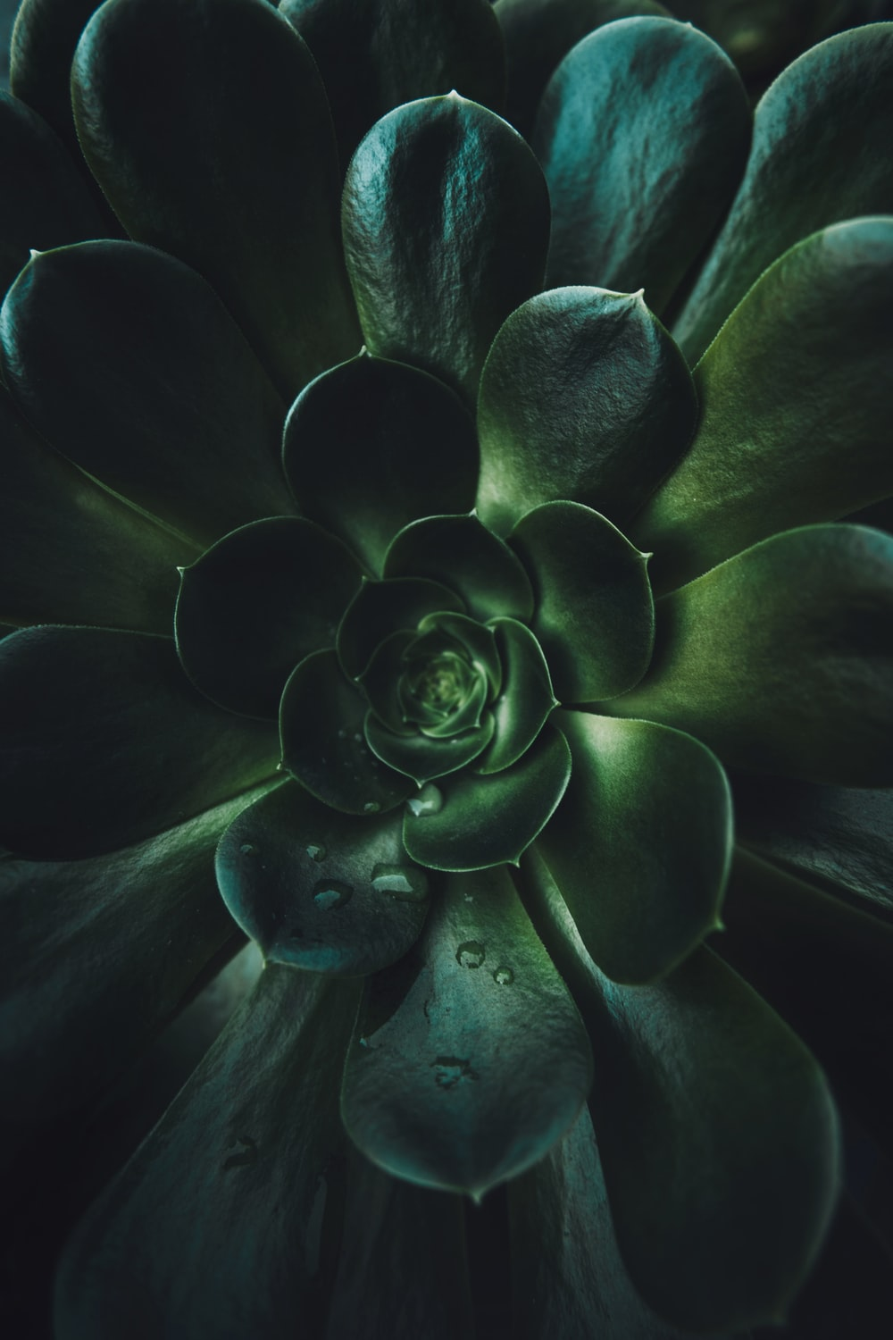 green and white flower in close up photography