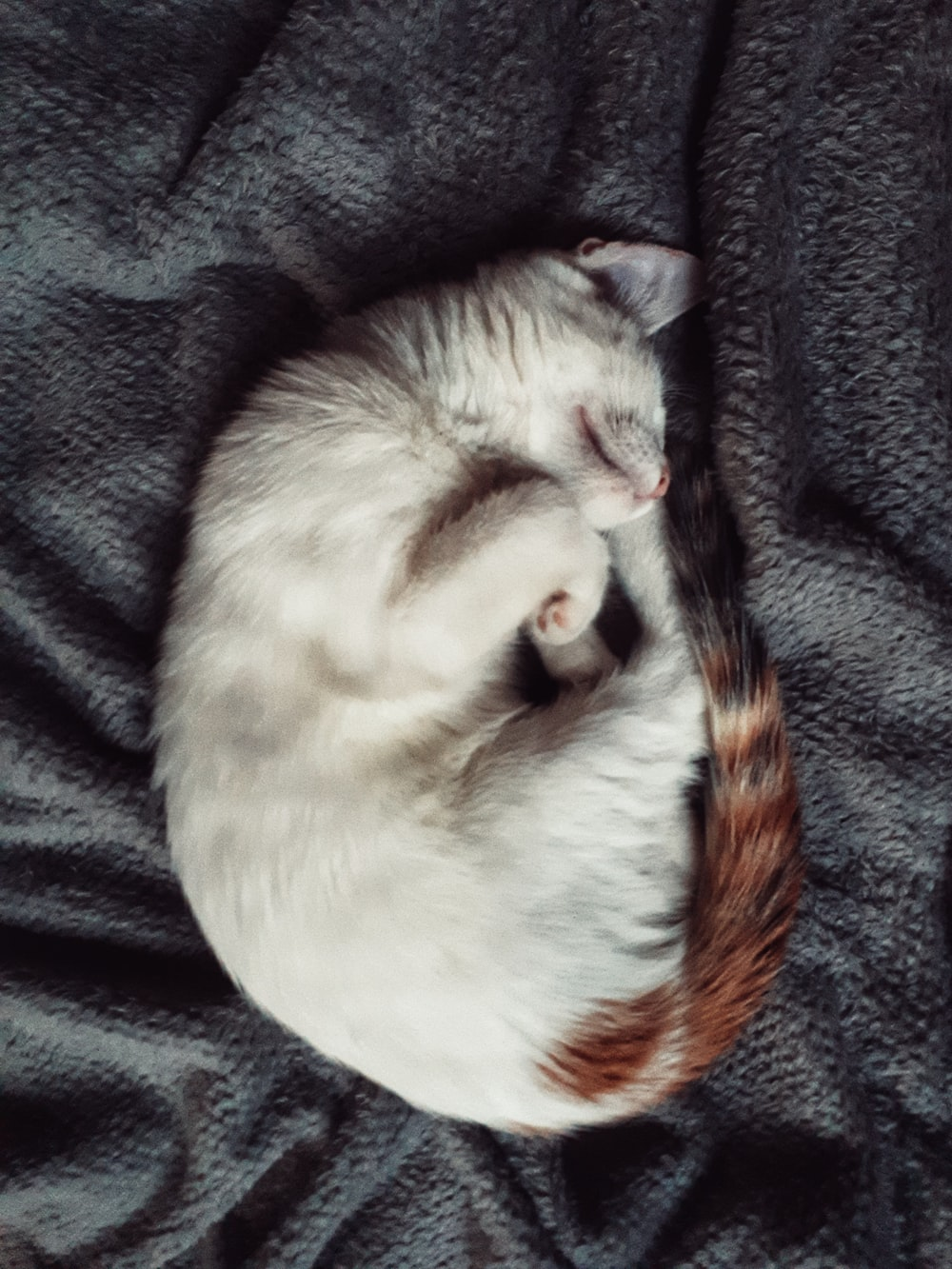 white and brown cat lying on black textile