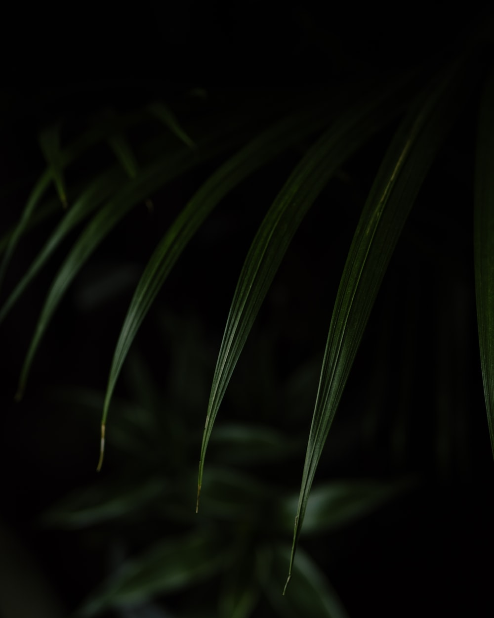 green plant in dark room