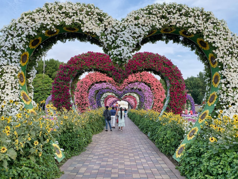 people walking on pathway surrounded by green and pink flower garden during daytime