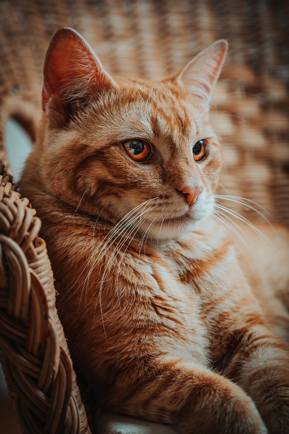 orange tabby cat in brown wicker basket