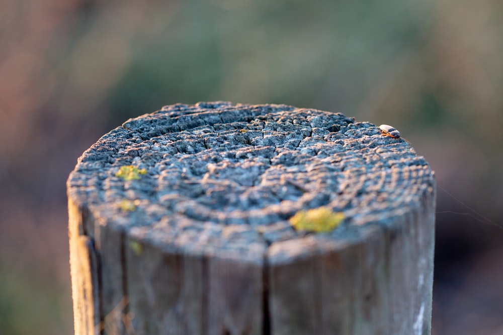 brown wooden log with yellow moss