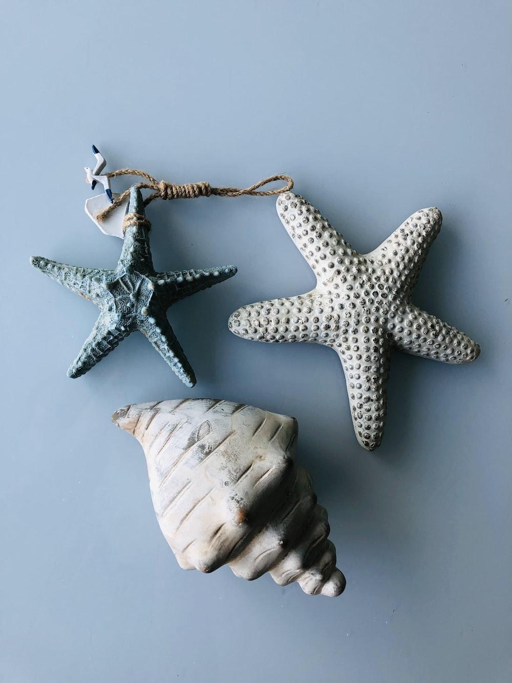 white starfish beside white starfish