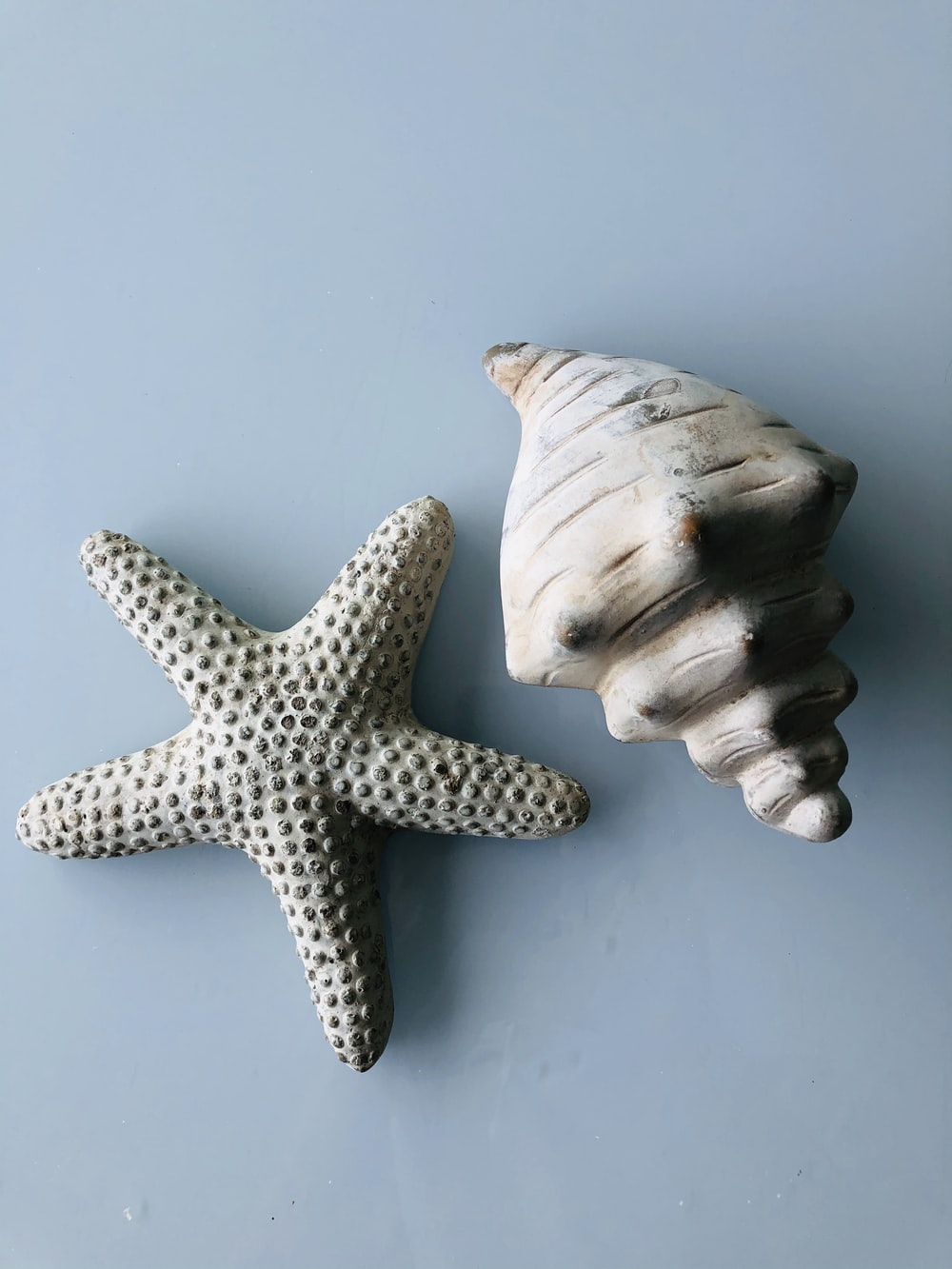 white and brown starfish on white surface