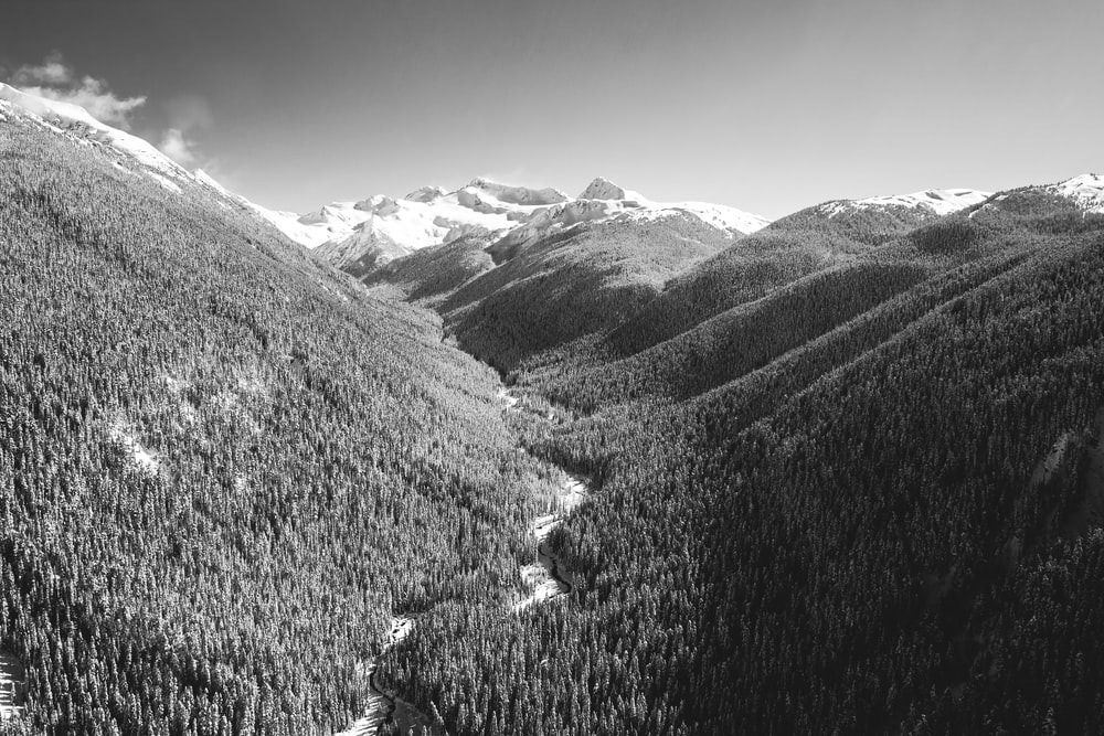 grayscale photo of mountains and trees