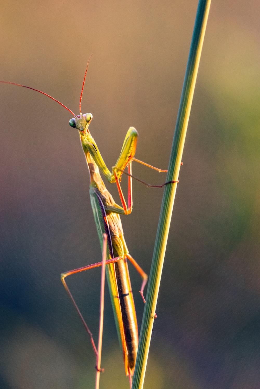 green praying mantis on brown stick in close up photography during daytime