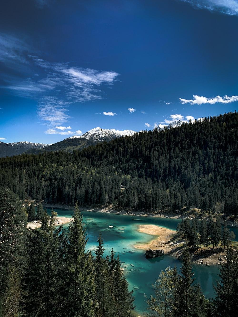 green pine trees near lake under blue sky during daytime