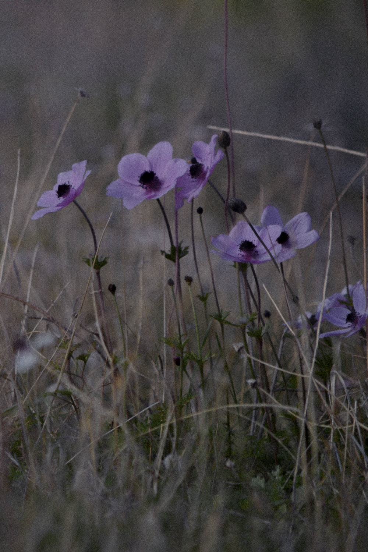 purple flower in green grass field