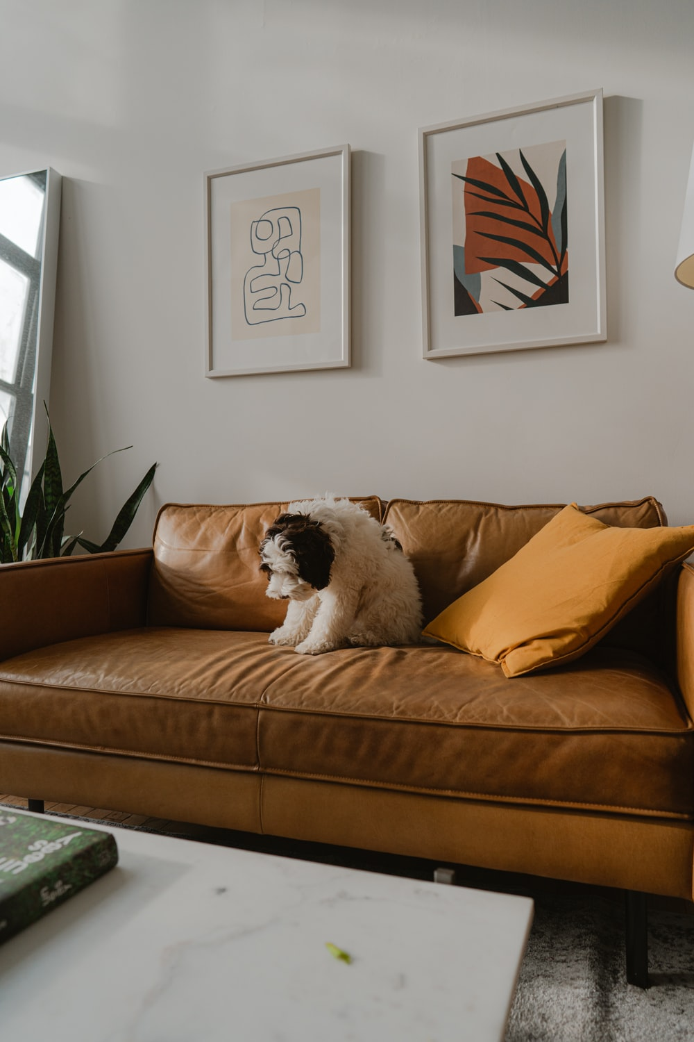 white and black short coated dog on brown couch