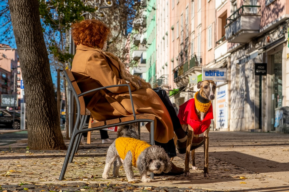 woman in red jacket sitting on chair beside white long coated small dog