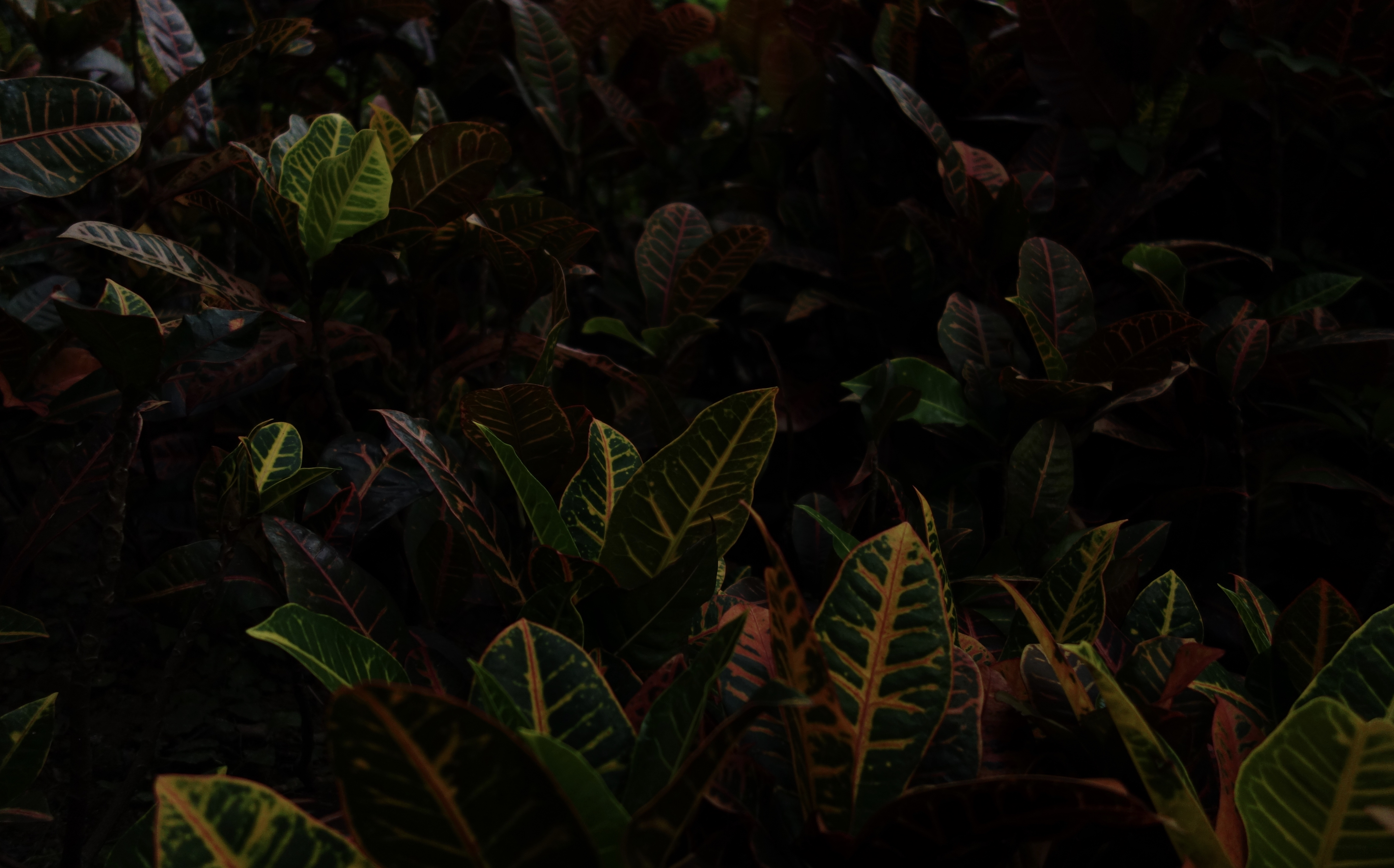 green and brown plant leaves