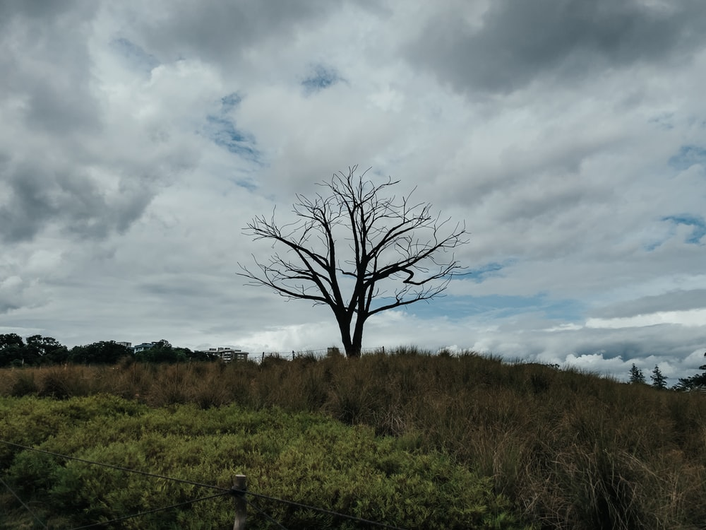 leafless tree on green grass field under cloudy sky