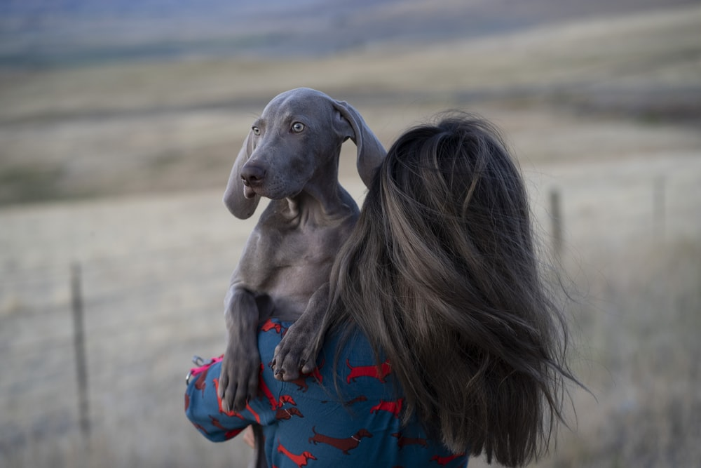 woman in red shirt hugging gray short coated dog