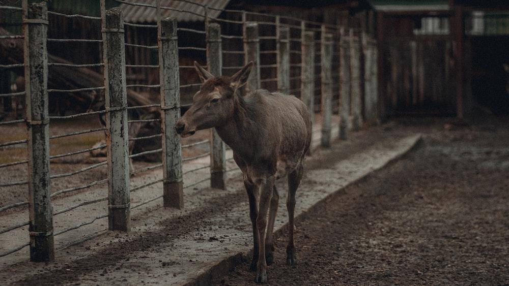 brown deer standing on brown soil during daytime