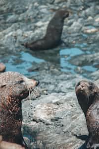 Sea Otters animal poems stories