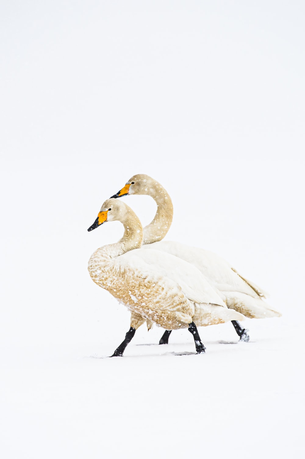 white swan on snow covered ground during daytime
