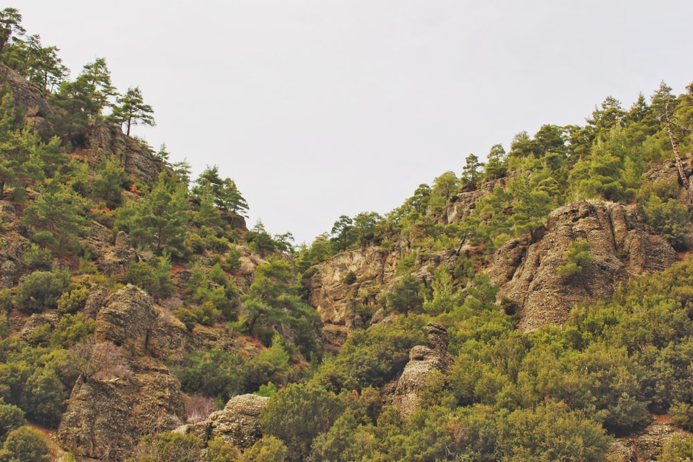 green trees on brown rocky mountain during daytime