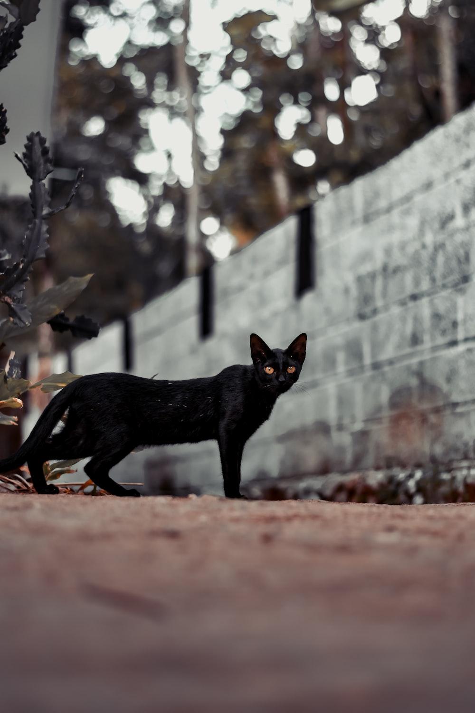 black cat walking on brown dirt during daytime