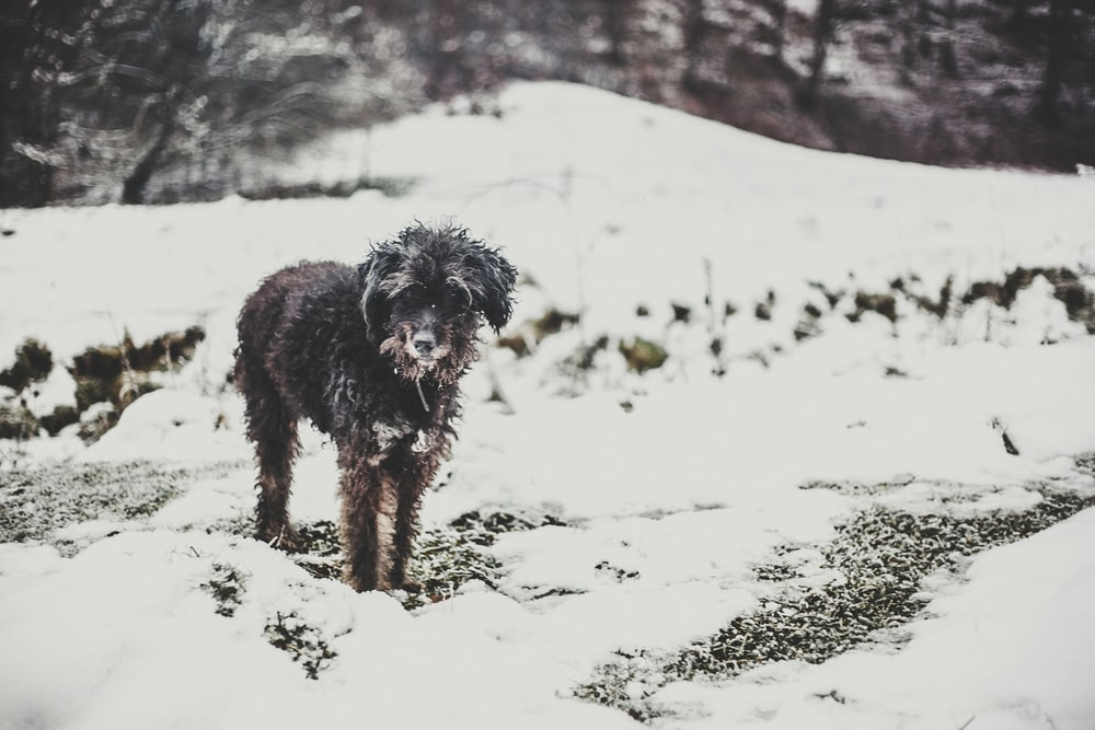 black long coat medium dog running on snow covered ground during daytime
