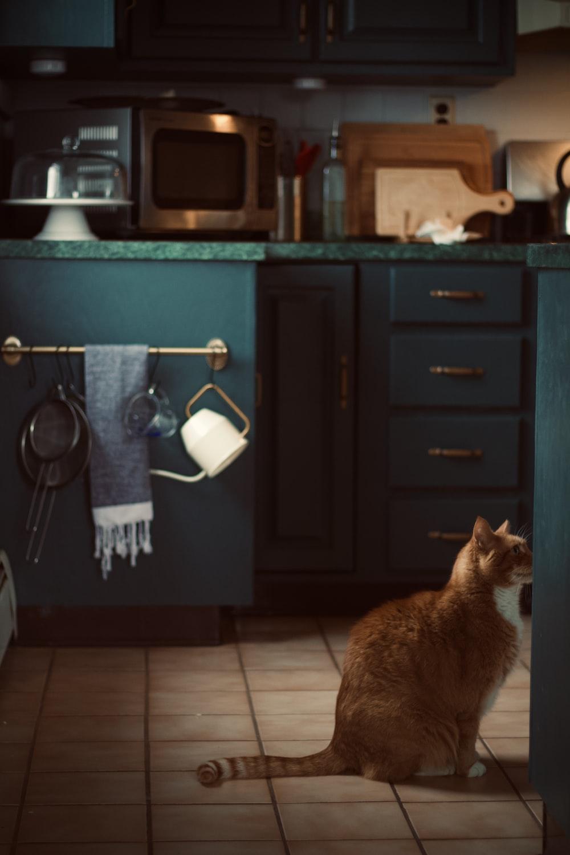 orange tabby cat on black wooden cabinet