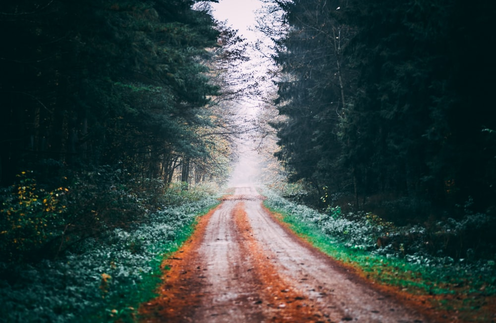 brown dirt road between green trees during daytime