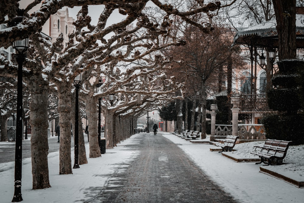 people walking on pathway between bare trees during daytime