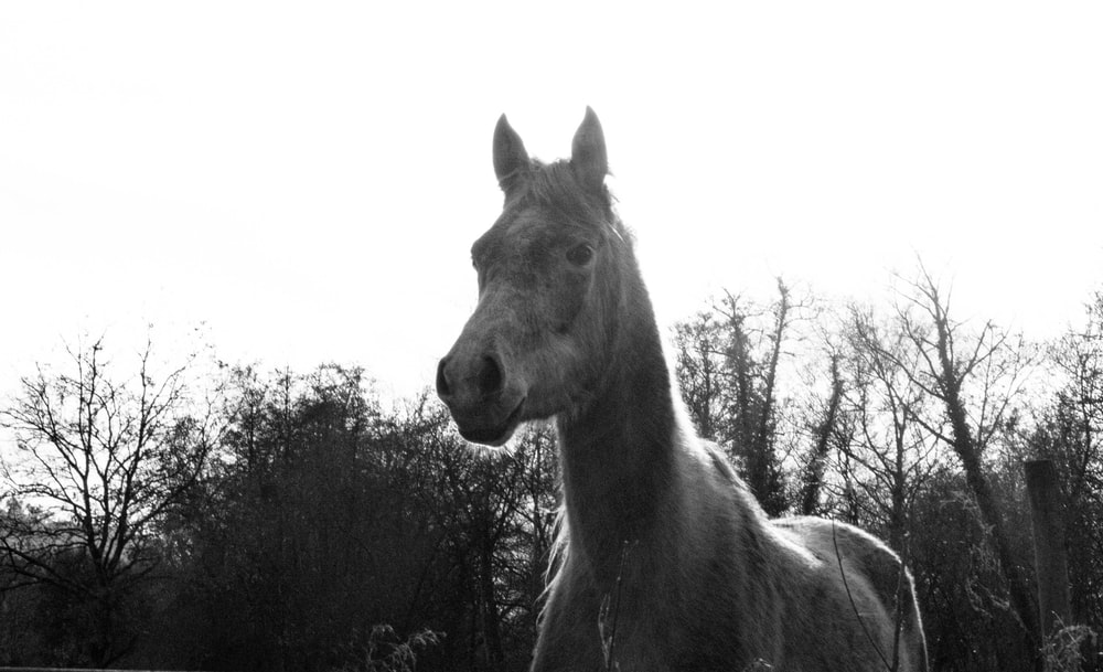 grayscale photo of horse near trees