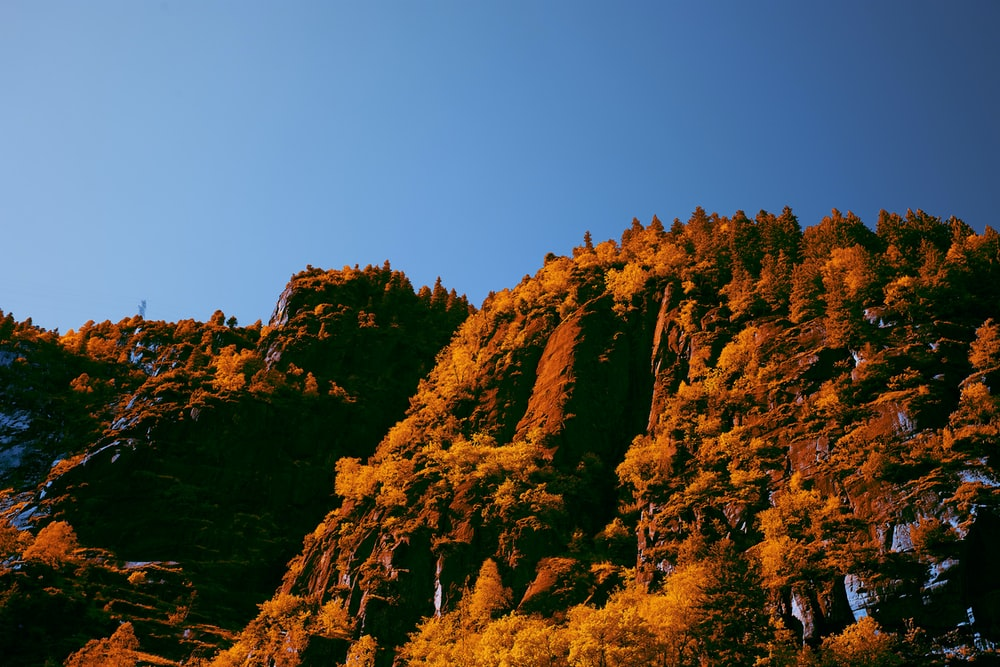 brown and green trees on brown mountain during daytime