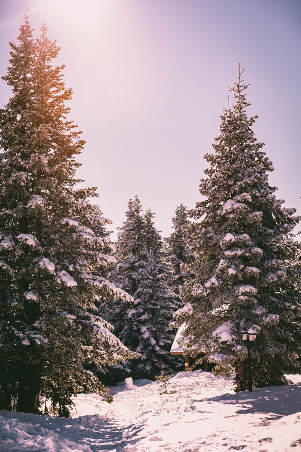 snow covered pine trees under white cloudy sky during daytime