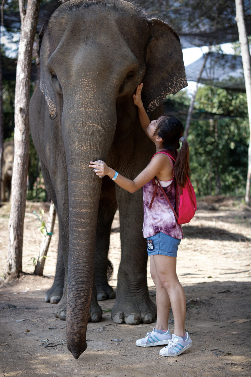 girl in pink tank top and blue shorts standing beside elephant during daytime