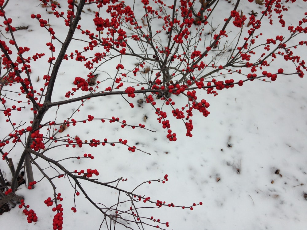 red and white flowers on tree branch
