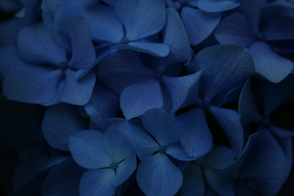 blue flower in close up photography