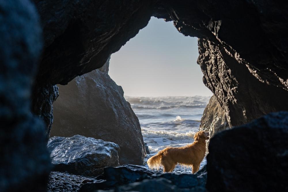 golden retriever on rocky shore during daytime
