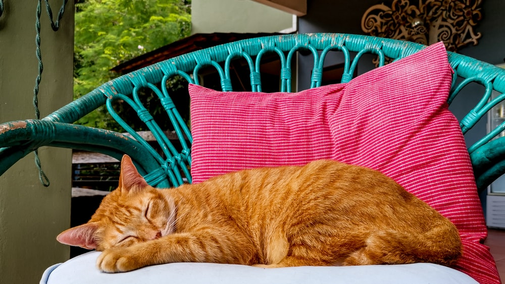 orange tabby cat lying on red and black striped textile