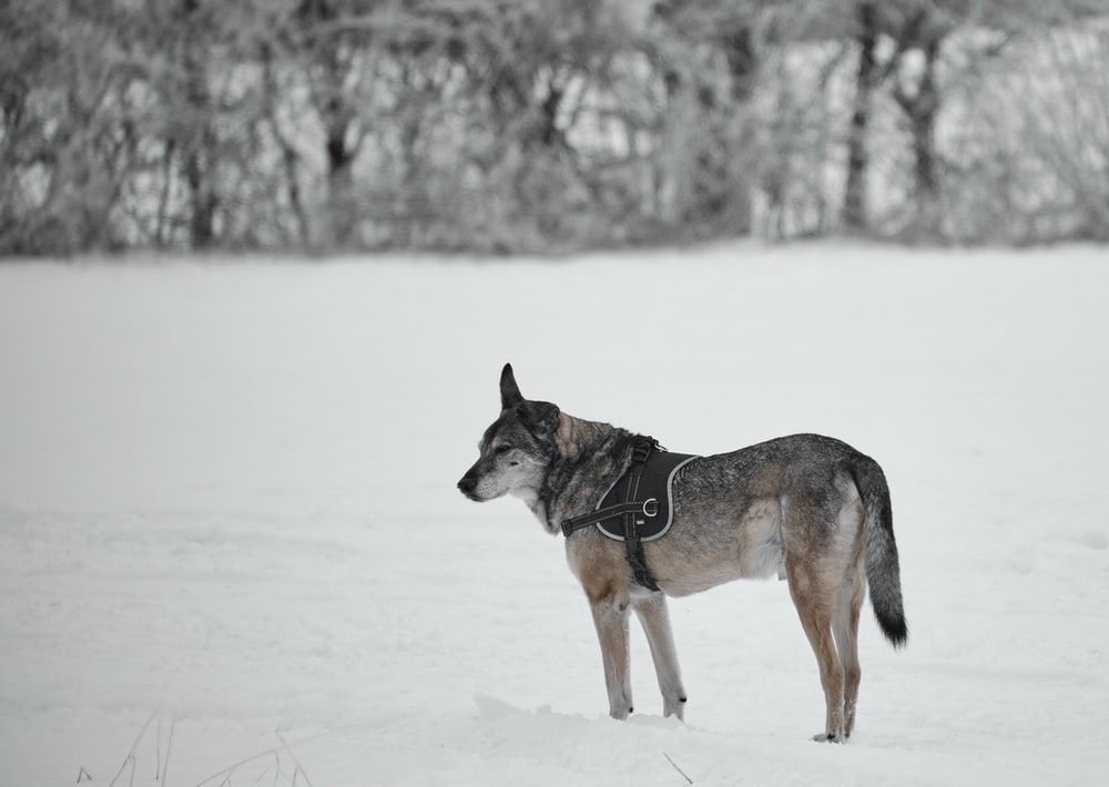 brown and black short coated dog on snow covered ground during daytime