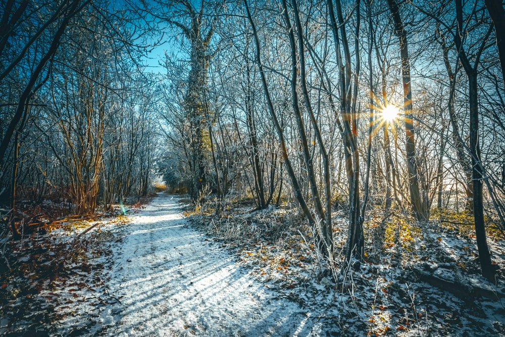 pathway between bare trees during daytime