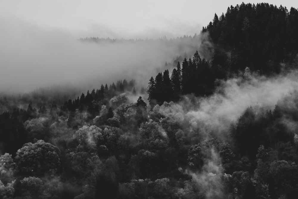 grayscale photo of trees covered with fog