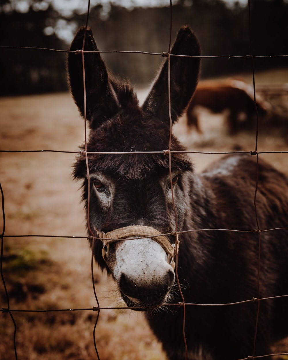black donkey standing on brown soil during daytime