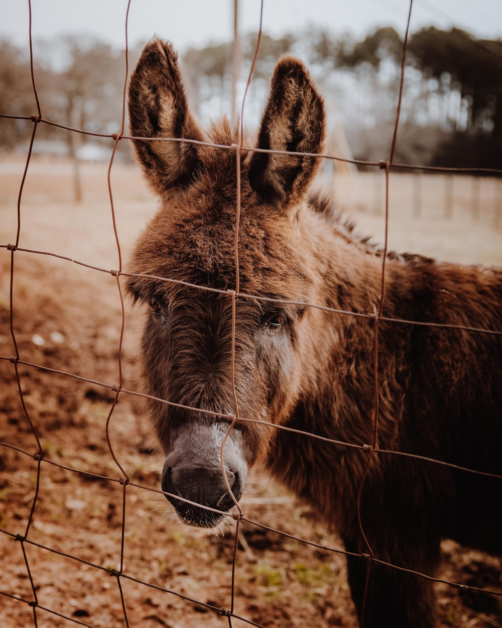 brown horse in cage during daytime