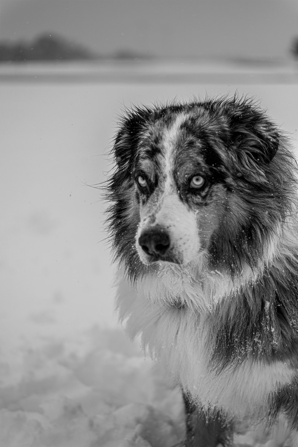 grayscale photo of a dog
