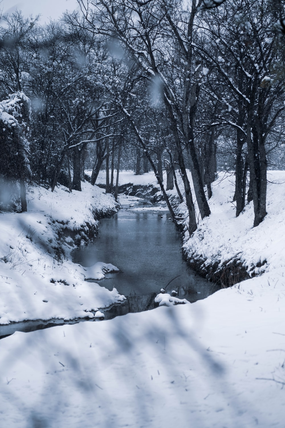 snow covered trees and river