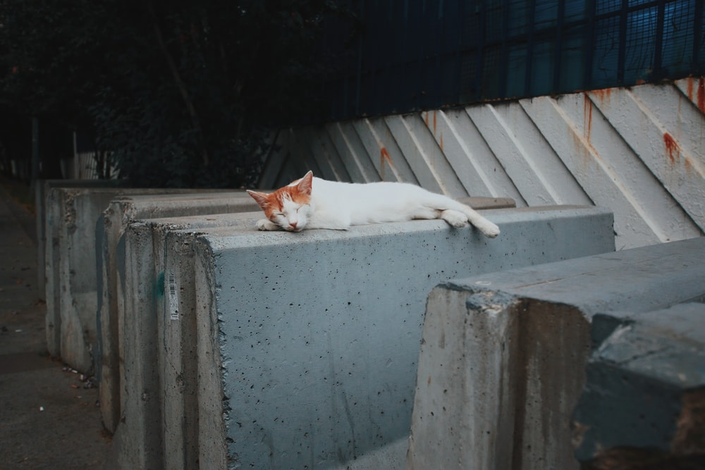white cat lying on gray concrete wall