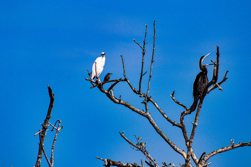 white bird on brown tree branch during daytime