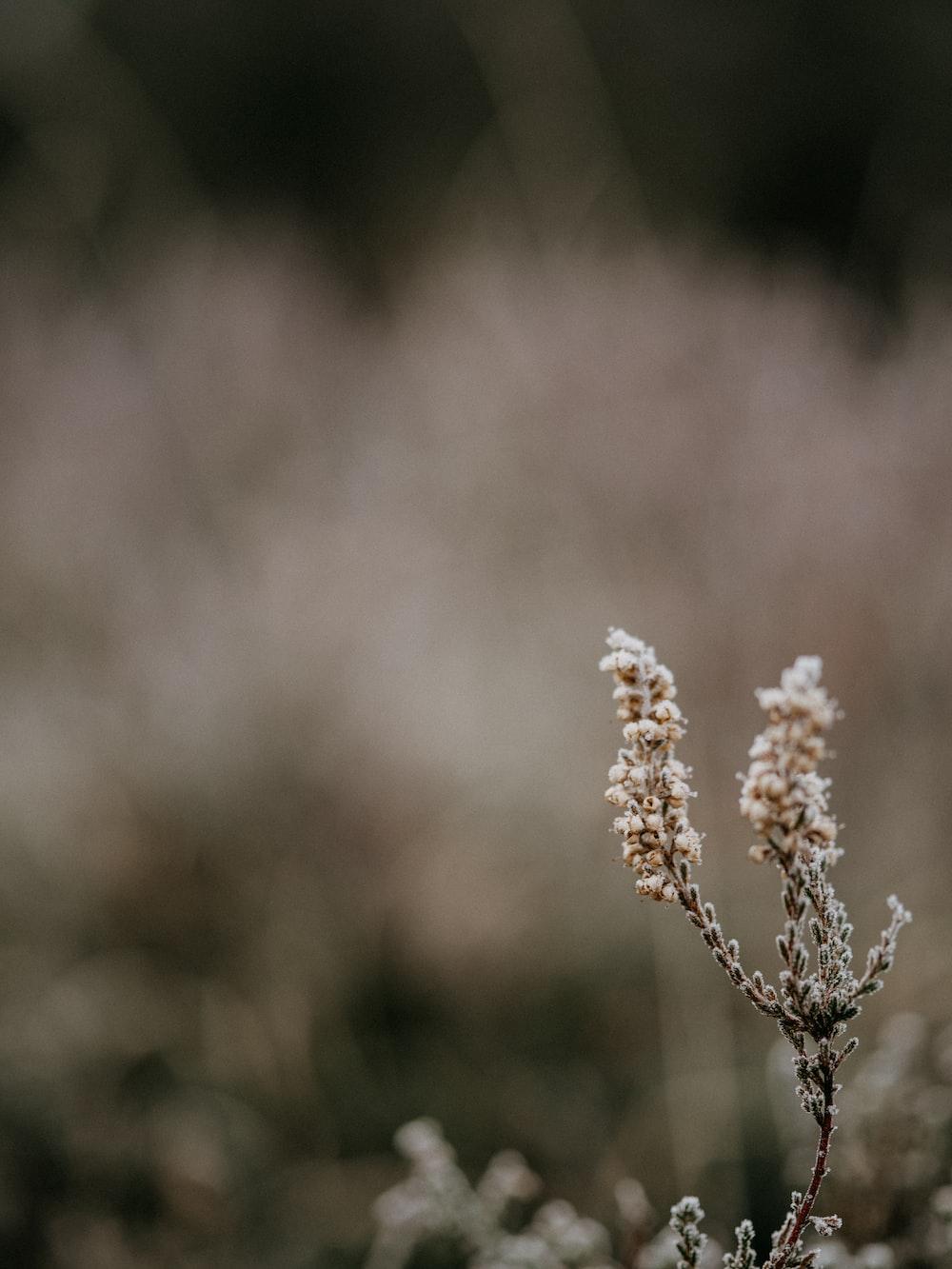 brown flower in tilt shift lens