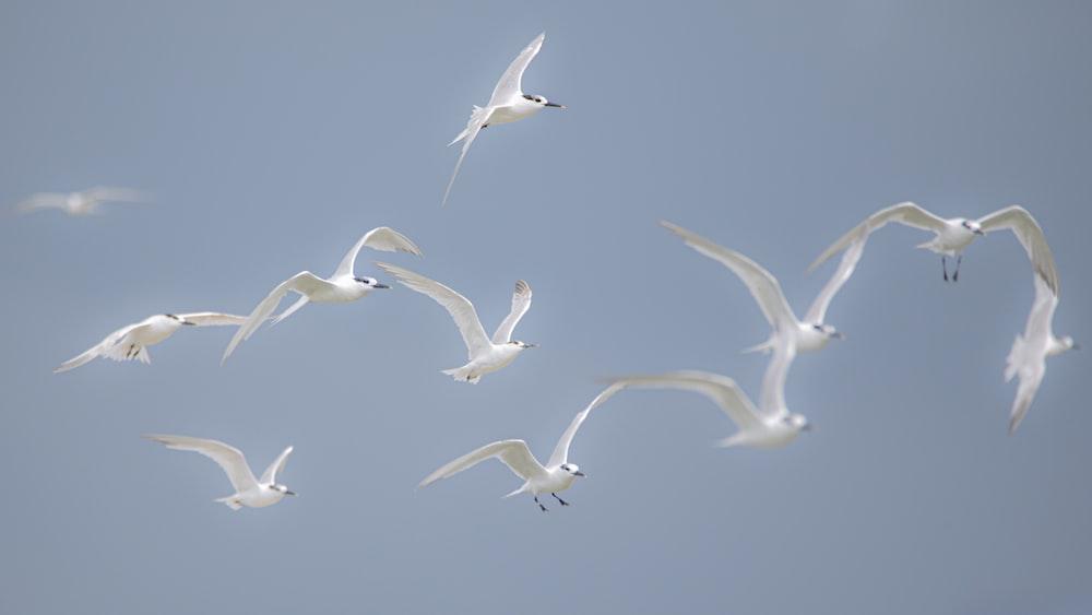 white birds flying during daytime
