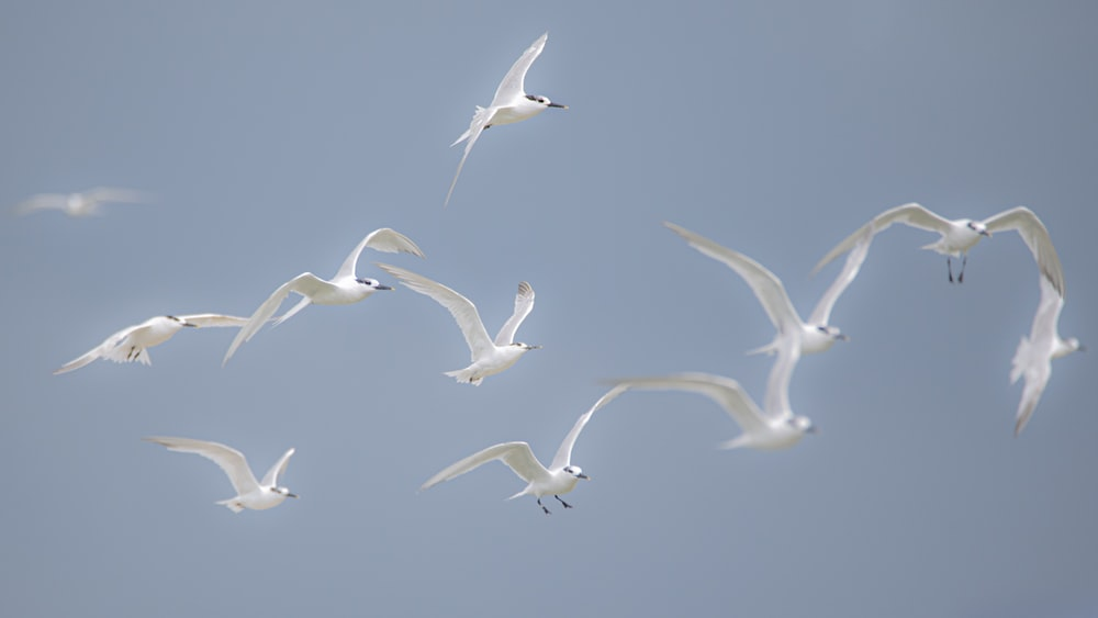 white birds flying during daytime