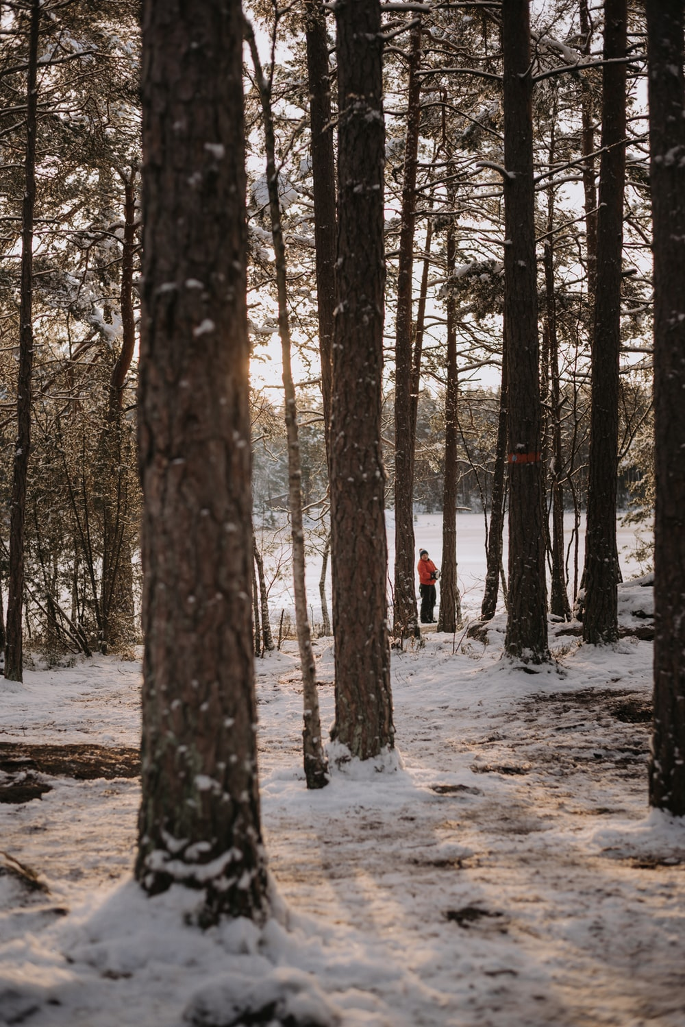 person in red jacket walking on snow covered ground in the woods during daytime