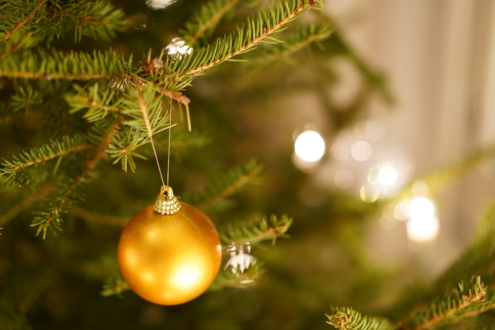 gold bauble on green pine tree
