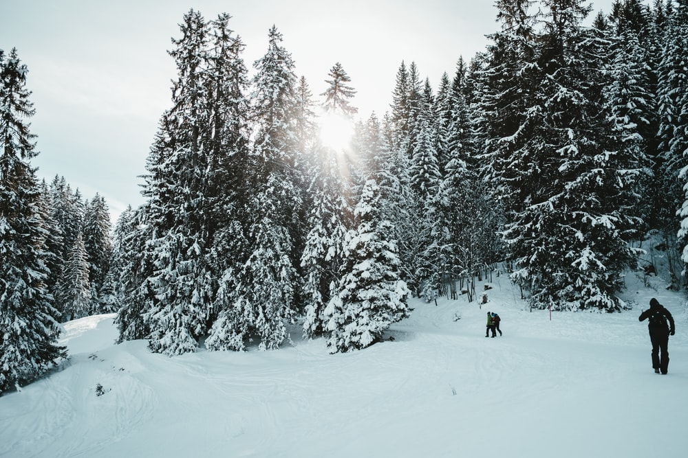 person in black jacket and black pants standing on snow covered ground near green trees during